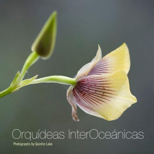 peruvian_orchids