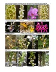 Peruvian Orchid Inventory 1 of 8