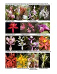 Peruvian Orchid Inventory 2 of 8