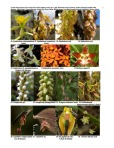 Peruvian Orchid Inventory 3 of 8