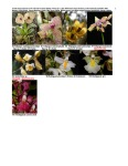 Peruvian Orchid Inventory Oxford Expedition 2008 8 of 8