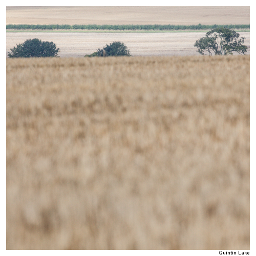 Ridgeway IX Wiltshire