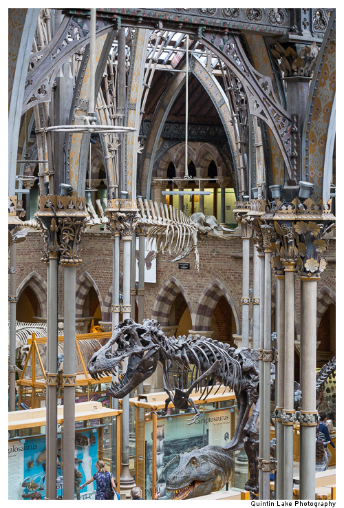 Interior of The Oxford University Museum of Natural History