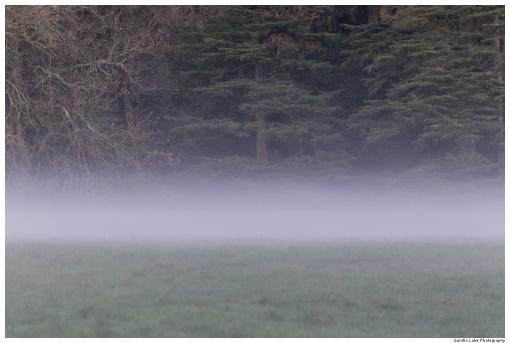 Mist at Westonbirt Arboretum. Tetbury, Gloucestershire, England.
