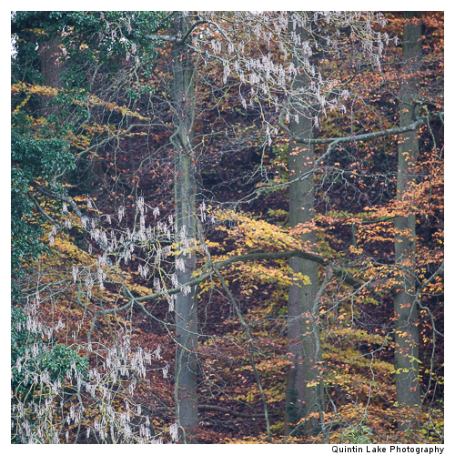 Autumn trees by the River Severn between Upper Arley and Worcest