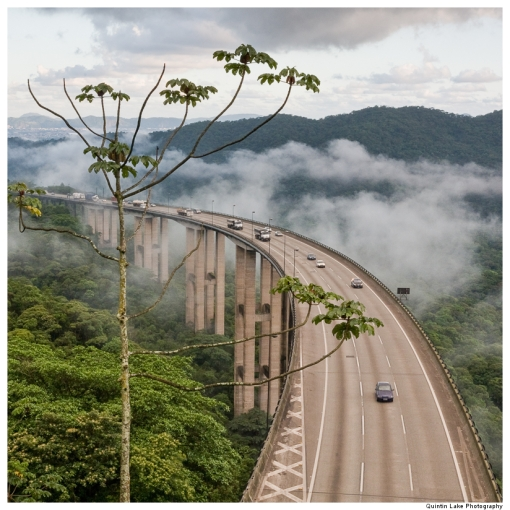 Jungle highway, Cubatão, Brazil