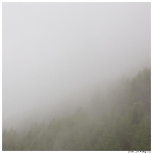 Medart Forest, Wales