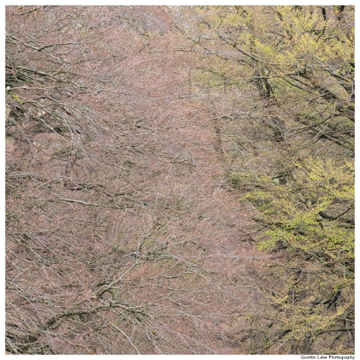 Glebe Wood, Abergavenny, Wales