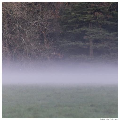 Divided Silence, Westonbirt Arboretum, England.