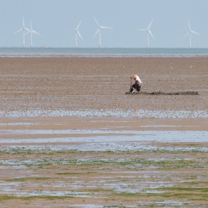 Digging in the Oaze below The Kentish Flats Offshore Wind Farm.