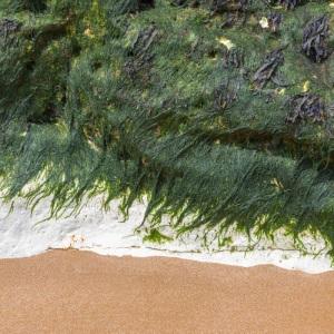 Base of Chalk Stack, Botany Bay.