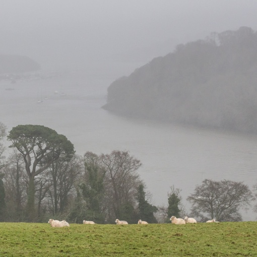 River Dart in the rain, from Greenway, Devon.