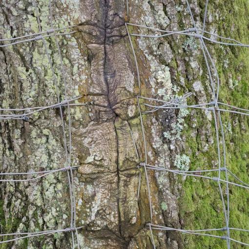 Engulfed fence, Bow Creek, Devon.