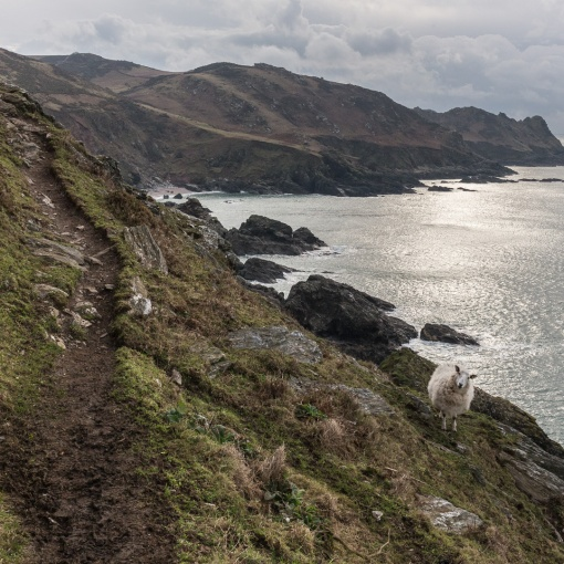 South West Coast Path from Pig's Nose, Devon.