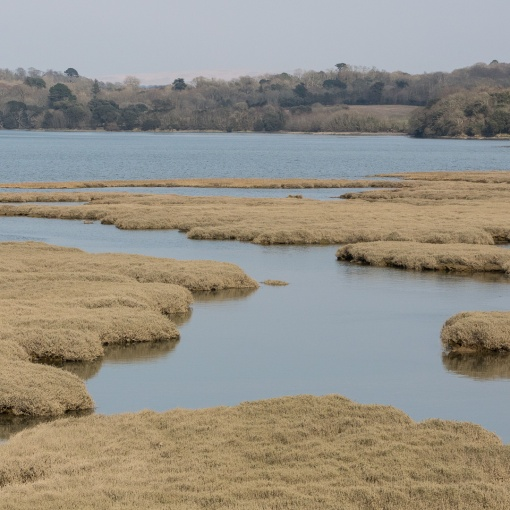 Salt Marshes, St Germans River, Cornwall.