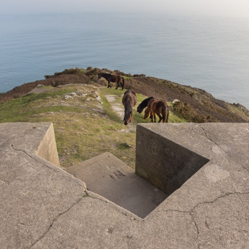 Dartmoor ponies & WW2 gun emplacement, Rame Head, Cornwall.