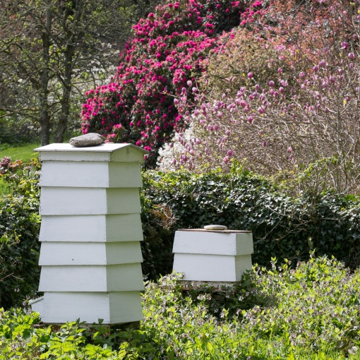 Beehives, Place House, St Anthony, Cornwall.