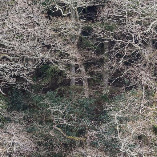 Lamorran Wood, River Fal, Cornwall.