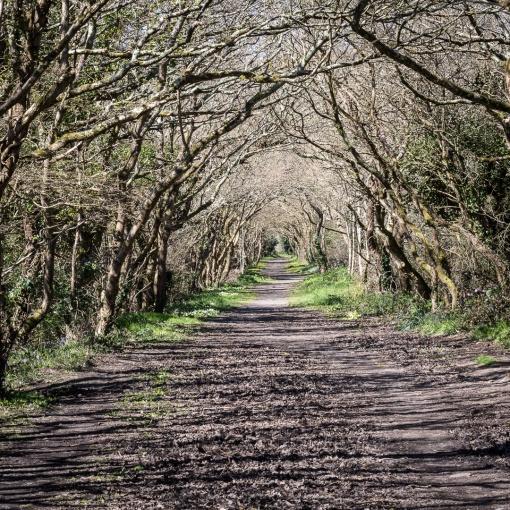 Old Newham Railway Line, Truro, Cornwall.