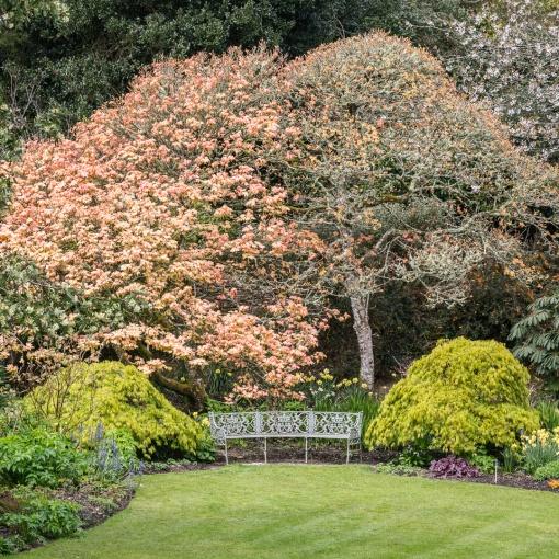 Seat at Trelissick Gardens , Cornwall.