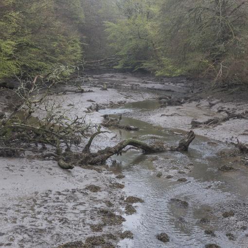 Mawgan Creek tributary, Cornwall.