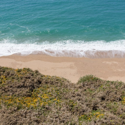 Gorse, Porthleven Sands, Cornwall.