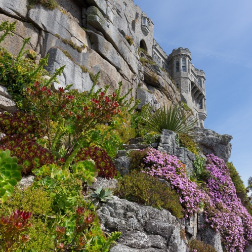 Sub-tropical plants of the west terrace garden, St Michael's Mount, Cornwall.