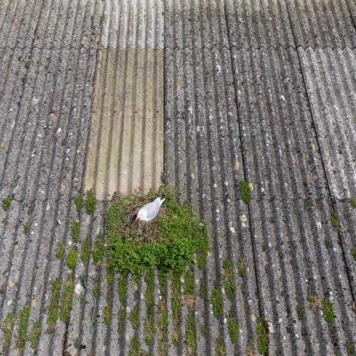 Nest, Newlyn Harbour, Cornwall.