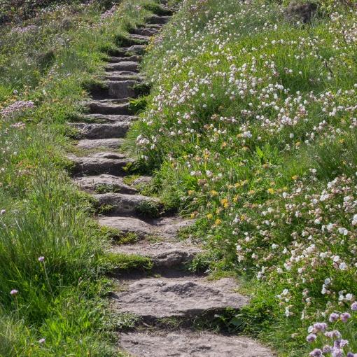 Coast Path, Lamorna Cove, Cornwall.