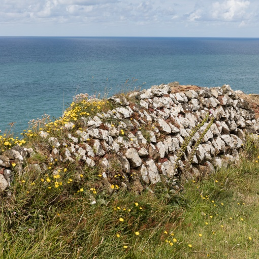 Dry stone wall near Pentire Point, Cornwall.