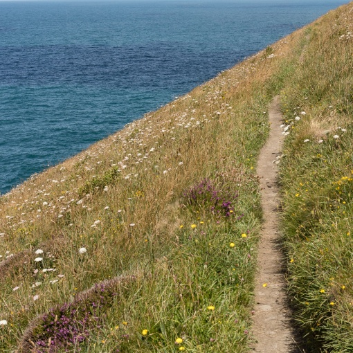 Coast path above Beeny Cliff, Cornwall.
