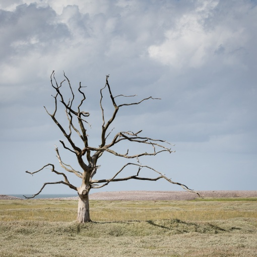 Skeletal Tree, Porlock Marshes, Somerset.