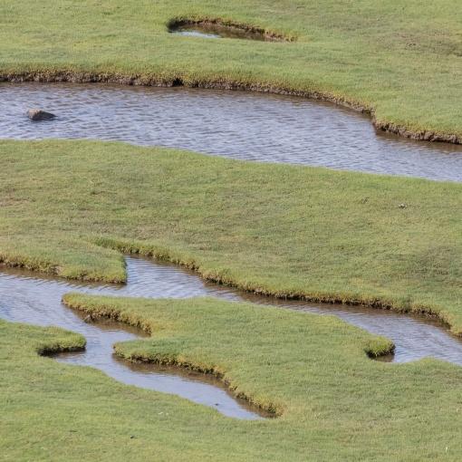 Ogmore River, tidal banks, Glamorgan.