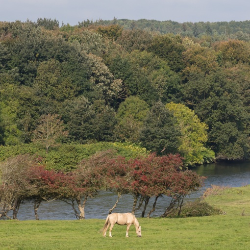 Ogmore River, Glamorgan.