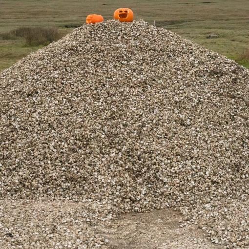 Halloween on Cockle shells, Crofty, Gower, Glamorgan.