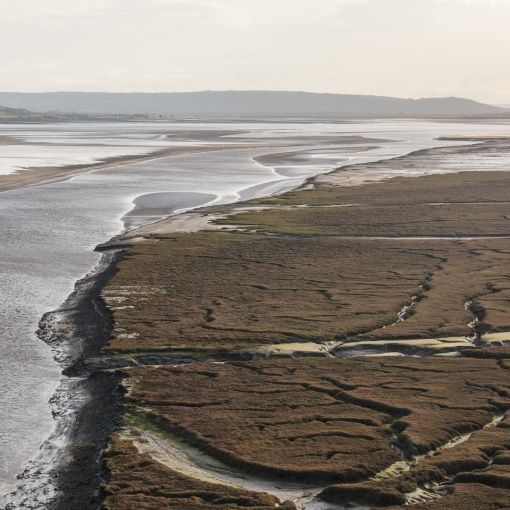 East marsh, Laugharne, Dyfed.