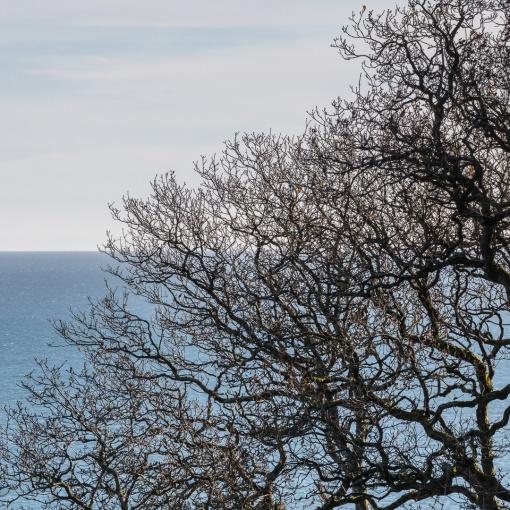 Leafless, Carmarthen Bay, Dyfed.